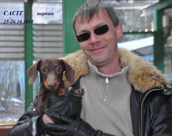 Такса миниатюрная гладкошерстная Империя Мокко Юсупов, Породный победитель междунарожных состязаний по лисе CACIT