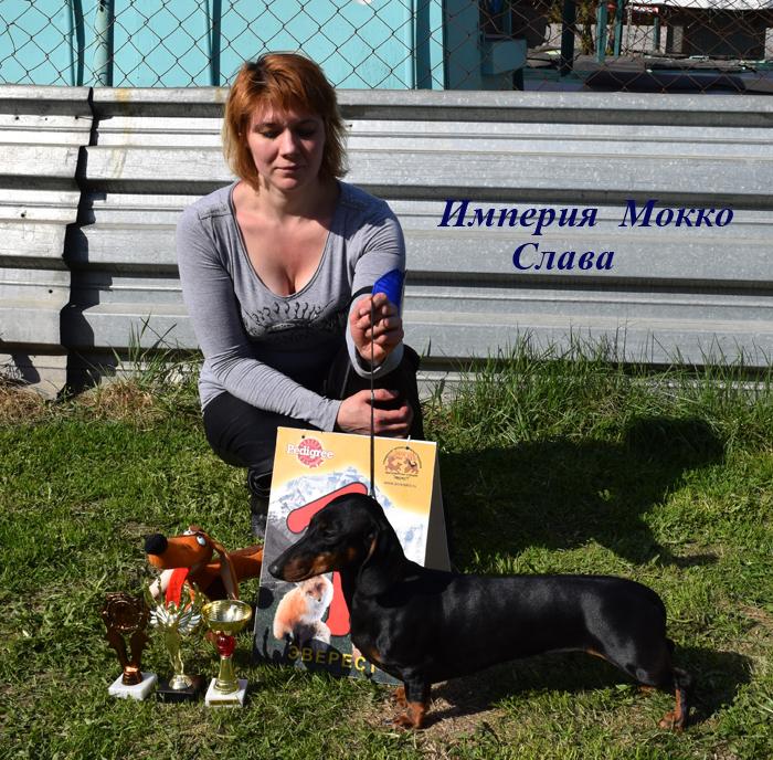 Элитные собаки и щенки Таксы гладкошерстной от питомника Империя Мокко